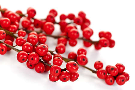 berry: Winterberry Christmas branches with red holly berries Stock Photo