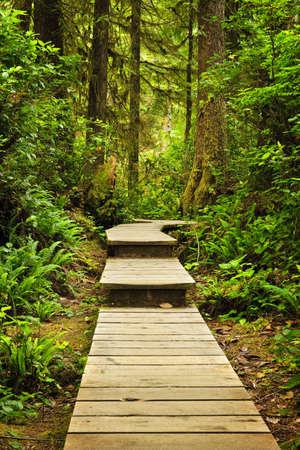Wooden path through temperate rain forest. Pacific Rim National Park, British Columbia Canada photo