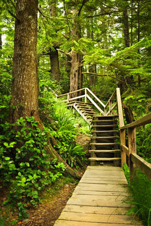 Path through temperate rain forest. Pacific Rim National Park, British Columbia Canada