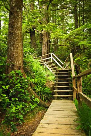hemlock: Ruta de acceso a trav�s de bosques templados de lluvia. Parque nacional Pacific Rim, Columbia Brit�nica, Canad�