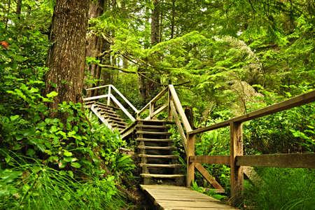 cicuta: Ruta de acceso a trav�s de bosques templados de lluvia. Parque nacional Pacific Rim, Columbia Brit�nica, Canad�