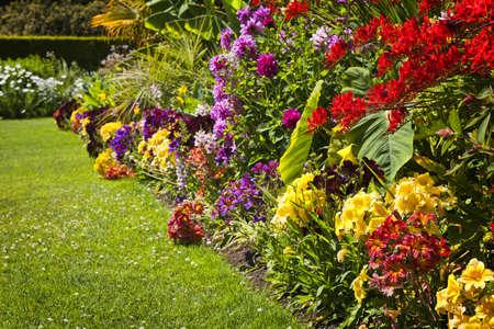 Mooie heldere kleurrijke bloementuin met verschillende bloemen