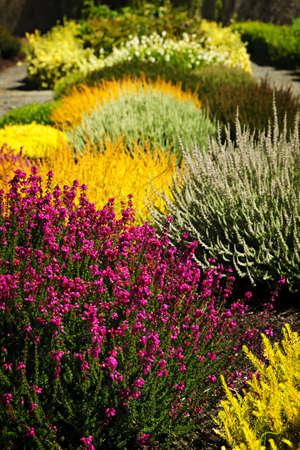 様々 な花で美しいカラフルなフラワー ガーデン 写真素材