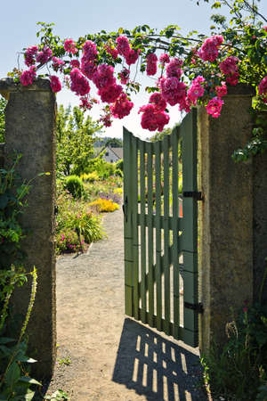 Pink roses hanging over open garden gate entrance photo