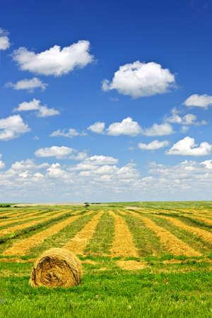 Harvested wheat on farm field with hay bale in Saskatchewan, Canada Stock Photo - 9734671