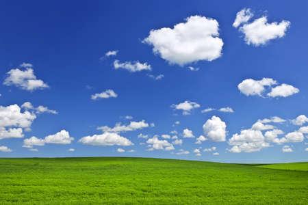 캐나다의 서스 캐처 원 대초원에 푸른 하늘 아래 무성한 녹색 렌즈 콩 및 밀 필드