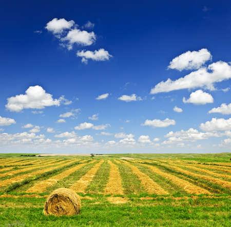 hayroll: Harvested wheat on farm field with hay bale in Saskatchewan, Canada