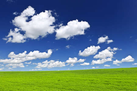 rolling hills: Lush green lentil and wheat fields under blue sky in Saskatchewan prairies of Canada