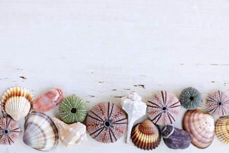 Border of Mediterranean seashells, urchins and rocks on painted wood background Stockfoto