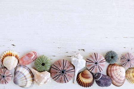 pilluelo: Conchas de borde del Mediterr�neo, erizos y rocas sobre fondo de madera pintada Foto de archivo