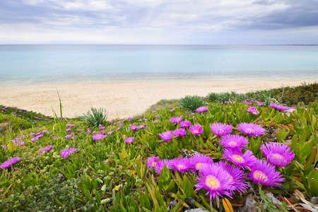 paisaje mediterraneo: Costa del mar Egeo con flores plantas en Chalkidiki, Grecia