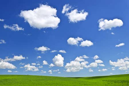 lentils: Exuberantes campos verdes, lentejas y trigo, bajo un cielo azul en las praderas de Saskatchewan de Canad�