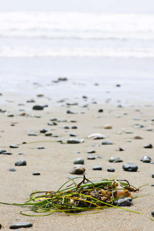 Seaweed on sand, Long Beach in Pacific Rim National Park, Canada Stock Photo - 10110722