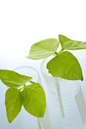genetically engineered: Genetically modified plant seedlings in two test tubes Stock Photo