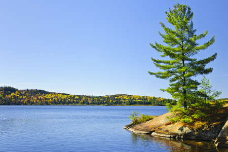 Tree and fall forest on rocky shore at Lake of Two Rivers, Algonquin Park, Ontario, Canada photo