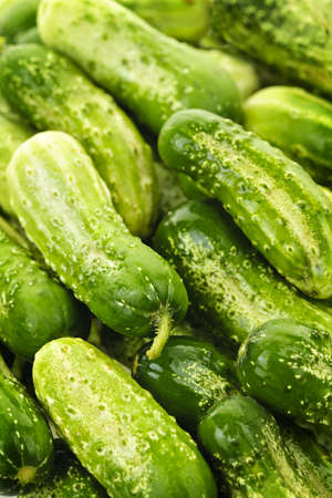 Fresh green cucumbers in a pile closeup, vegetable background photo