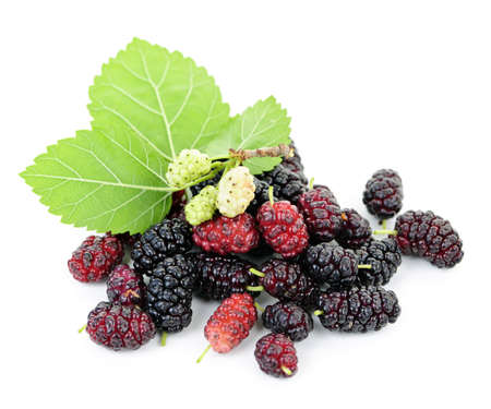 Fresh ripe mulberry berries with leaves isolated on white background