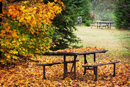 Picknick tafel bedekt met kleurrijke herfst bladeren, Algonquin Park, Canada.