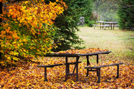 fall scenery: Picnic table covered with colorful fall leaves, Algonquin Park, Canada. Stock Photo