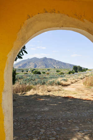 Agave cactus field landscape from doorway near Tequila in Jalisco, Mexico photo