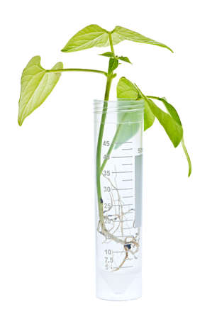 genetically engineered: Genetically modified plant seedling in test tube isolated on white Stock Photo