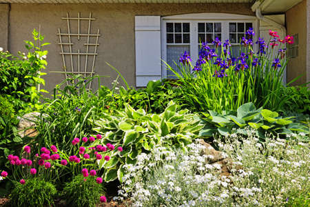Residential landscaped garden with flowers and plants photo