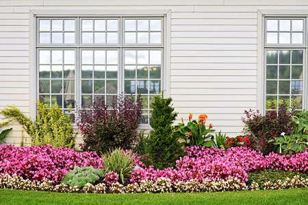 Aiuola di fiori colorati contro il muro con finestre