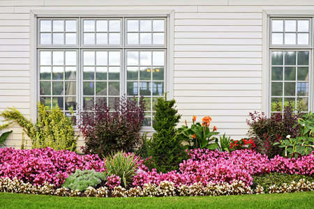 Flowerbed of colorful flowers against wall with windows photo