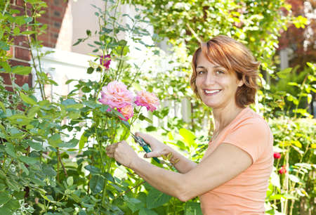 Happy woman gardening and pruning rose bush with garden shears Stock Photo - 12389880