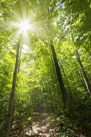 shining through: Sun shining through trees on forest path in wilderness Stock Photo
