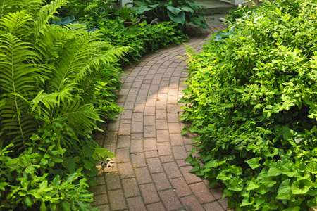 helechos: Asfaltado camino de ladrillos en el exuberante jardín verde de verano