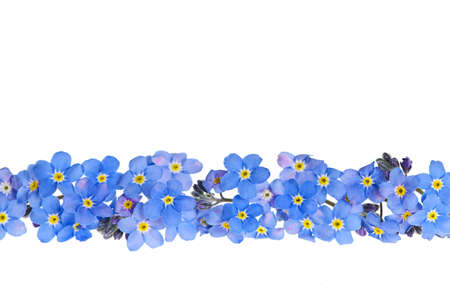 flower petal: Arrangement of blue forget-me-not flowers isolated on white background