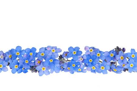 borde de flores: Disposici�n de los azules-me-olvides, no flores aisladas sobre fondo blanco Foto de archivo