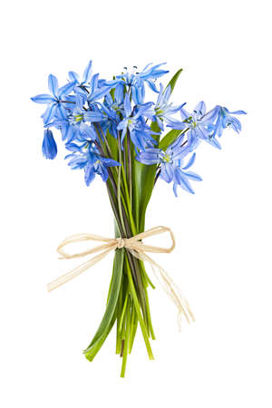 wild flowers: Glory-van-de-sneeuw voorjaar bloemen boeket op een witte achtergrond