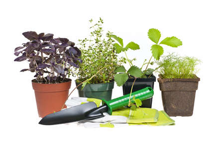 Plants and seedlings with gardening tools isolated on white photo