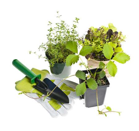 Planten en zaailingen met tuingereedschap op wit wordt geïsoleerd