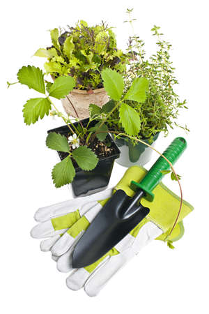 Plants and seedlings in pots with gardening tools isolated on white Stock Photo - 13558546