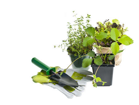 Plants and seedlings in pots with gardening tools isolated on white Stock Photo - 13558505