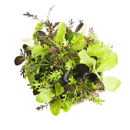 Potted zaailingen van tuin sla en groene salades van boven