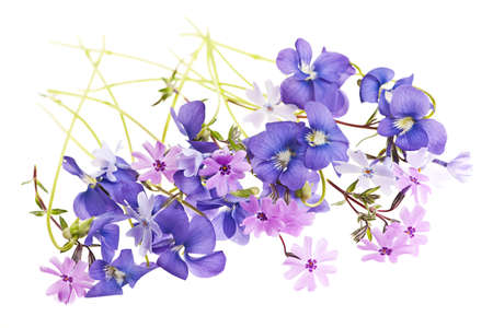 Purple violets and moss pink spring flowers arrangement isolated on white background