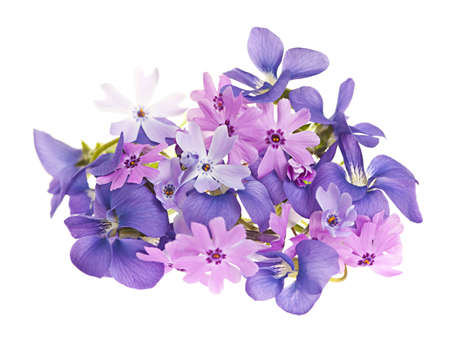 group of plants: Arrangement of spring flowers purple violets and moss pink isolated on white background