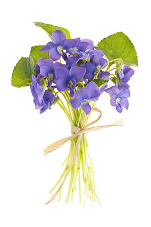 violets: Bouquet of purple wild violets tied with bow isolated on white