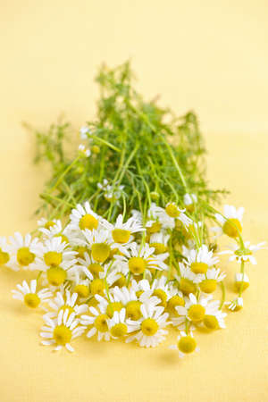 Bunch of fresh chamomile flowers on yellow background photo