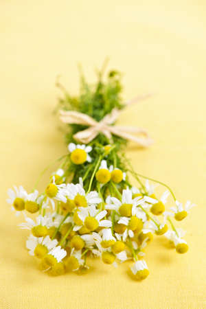 Bunch of fresh chamomile flowers on yellow background tied with bow photo