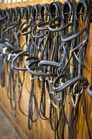 tack: Leather horse bridles and bits hanging on wall of stable