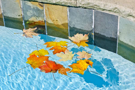 edge: Fall leaves floating in swimming pool water