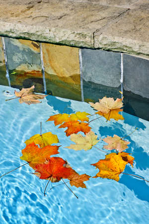 Fall leaves floating in swimming pool water photo