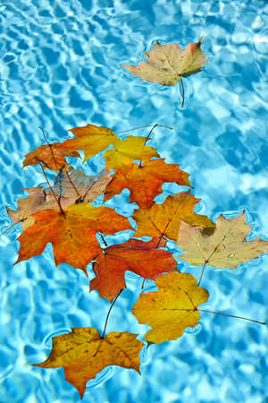 Fall leaves floating in swimming pool water Stock Photo - 16419294