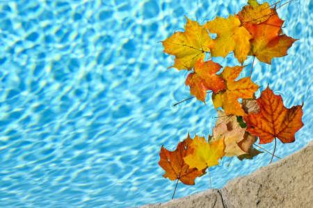 Fall leaves drijvend in het zwembad water Stockfoto