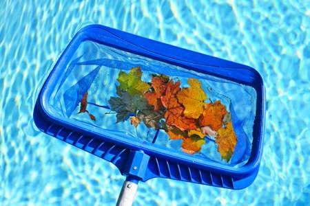 Limpieza de piscina de las hojas de otoño con skimmer azul antes de cerrar Foto de archivo